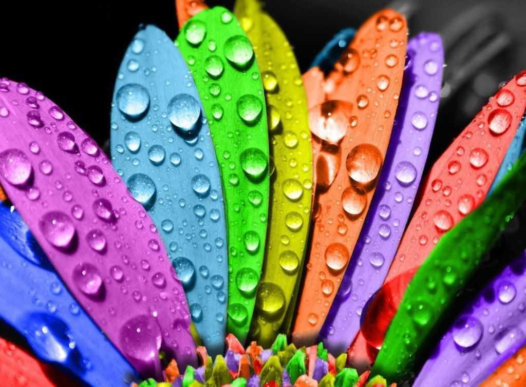 Разнообразие цвета лакокрасочного покрытия