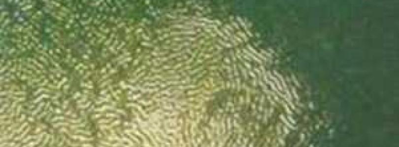 Эффект сморщивания свеженанесенного слоя краски на кузове